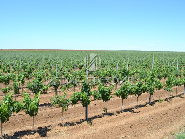 столбы для винограда Иприс Профиль