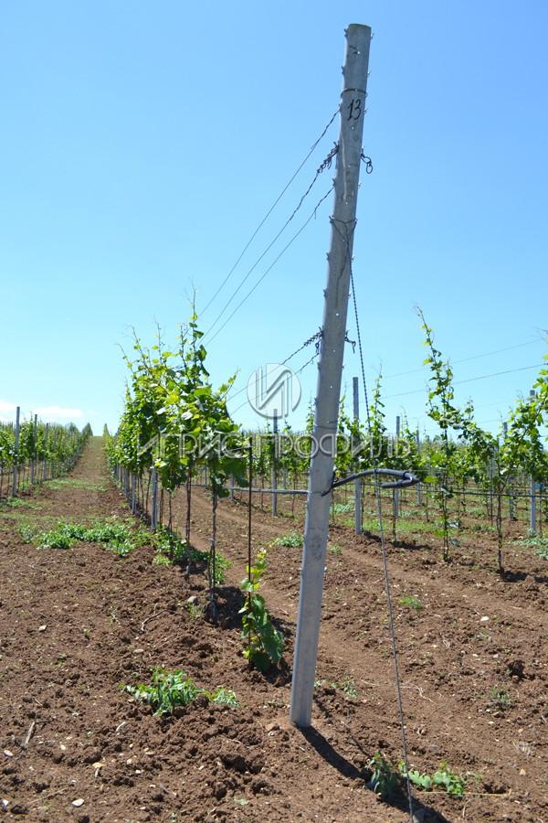 столбики для винограда металлические