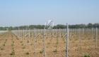 столбы для винограда харьков