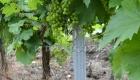 стойки для винограда Харьков