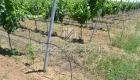 анкер виноградный иприс профиль